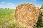 stock photo of hay bale  - Hay bales in the field to dry in the sun - JPG