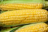 image of maize  - Corn or maize is on sale at the Bazaar - JPG