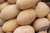 stock photo of cucurbitaceous  - Melon or Cucumis melo plant family Cucurbitaceae cucurbitaceous culture - JPG