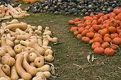 Pumpkins ands Squash