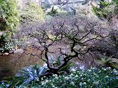 Twisted Tree Near Pond