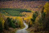 Dirt Road Snakes Through Colorful Woods In Northern Maine poster
