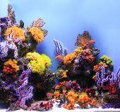 Underwater Image Of A Salt Water Aquarium