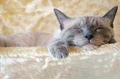 Постер, плакат: Sleepin кошка