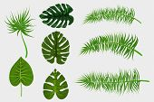 Set Collection Isolated. Tropical Background Vector Palm Leaf. Exotic Summer Green Jungle Tree. Hawa poster