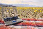 stock photo of blue-screen-of-death  - computer with a picture of the local wildflowers on screen sitting on a blanketamid the wildflowers in Death Valley - JPG