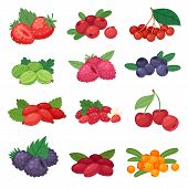 Berry Vector Berrying Mix Of Strawberry Blueberry Raspberry Blackberry And Red Currant Illustration  poster