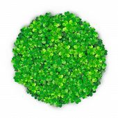 Patricks Day Background In Round Circle Shape With Four Green Clover Heap With Realistic Shadows. Ve poster
