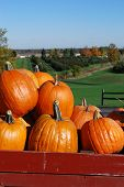 stock photo of hayride  - Pumpkins in a red wagon overlooking an apple orchard - JPG