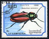 Scarlet Malachite Beetle