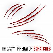 Animal Red Scratches On White Background. Claw Scratch Mark. Animal Predator Paw Claw, Knife Scratch poster