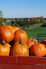 pic of hayride  - Pumpkins in a red wagon overlooking an apple orchard - JPG