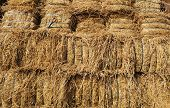 Dry Hay Bales. Hay Bales Are Stacked In Large Stacks. Harvesting In Agriculture.bales Of Hay. Hay Ba poster