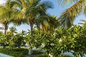 Gorgeous View Of Green Plants With White Flowers Under Green Palm Trees. Beautiful Green Nature Back poster
