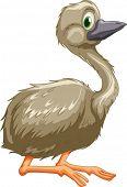 Illustration of isolated emu bird