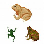 Vector Design Of Frog And Anuran Logo. Collection Of Frog And Animal Stock Symbol For Web. poster