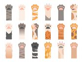 Pets Paw. Wild Cats Different Paws With Claws Vector Collection. Colored Pet Paw With Claw, Animal C poster