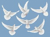 Realistic Doves. White Freedom Flying Birds Pigeons Religion Symbols Vector Pictures Collection. Set poster