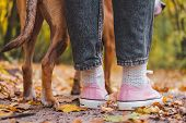 Human And Dogs Feet Among Autumn Leaves, Rear View. Close-up Shot Of Sneakers And Dogs Legs Side B poster