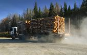 A Large Truck Carries Freshly Sawn Logs Along A Dirt Road Against A Forest And Blue Sky. poster