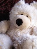 picture of teddy-bear  - teddy bear with dark brow velvet background - JPG