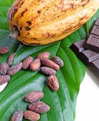 Cocoa Pod With Cocoa Beans And Chocolates
