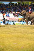 Surin Elephant Kicking Soccer Ball High V