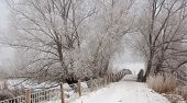 View At A Small Wooden Bridge In Winter