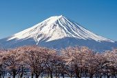 Mt. Fuji In The Spring Time With Cherry Blossoms At Kawaguchiko Fujiyoshida, Japan. Mount Fuji Is Ja poster