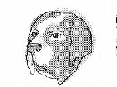 Retro Cartoon Style Drawing Of Head Of A Saint Bernard , A Domestic Dog Or Canine Breed On Isolated  poster