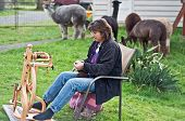 stock photo of alpaca  - This middle aged country woman is sitting and spinning alpaca wool into yarn with the alpacas in the background - JPG