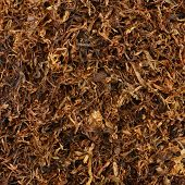 dried smoking tobacco close-up macro view