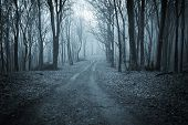 stock photo of eerie  - Road trough a dark blue forest with fog - JPG