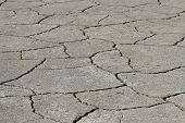 Part Dry Land