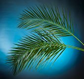 Palm branch on the blue sky background