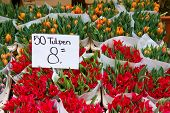 Colorful red tulips on sale