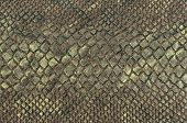 Snake Skin Texture Background