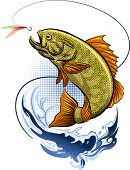 picture of freshwater fish  - Big Fish is jumping out of the Water after a hook with feather bait - JPG