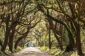 foto of backwoods  - Trees tunnel  - JPG