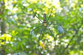 Large Tropical Spider