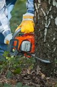stock photo of chainsaw  - cuts down the tree by the chainsaw - JPG