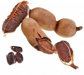 picture of tamarind  - Ripe tamarind fruit  - JPG