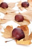 a pile of chestnuts on autumn leaves on a white background