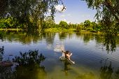 A Boy Jumps In A Lake With A Bungee Jumping