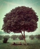 Vintage retro hipster style travel image of loneliness solitude  sadness background - lonely tree an