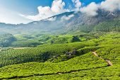 Kerala India travel background - green tea plantations in Munnar, Kerala, India - tourist attraction