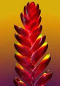 image of bromeliad  - a single bromeliad on a bright orange background - JPG