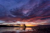Spectacular sunset in the Philippines on the island of Siquijor with a lone mangrove tree silhouetted against the fiery orange sky