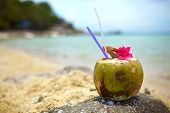 Coconut Drink, Purple Flower On Rock With Beach And Sea Blurry Background