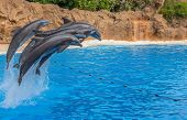 Dolphins Jumping Over a Rope